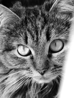 A black and white portrait of Nataliia's cat